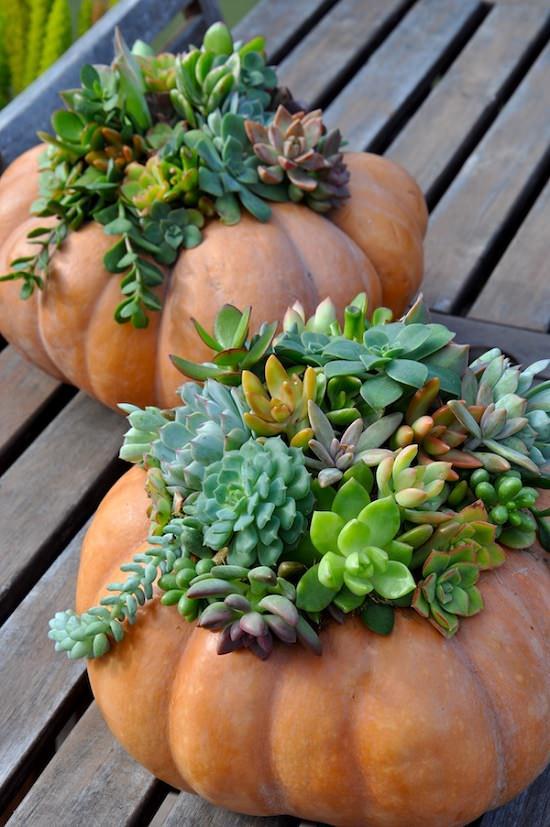 Succulents and Pumpkins!